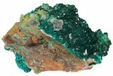 "2.15"" Gemmy Dioptase Crystals on Dolomite - Ntola Mine, Congo - #130501-4"